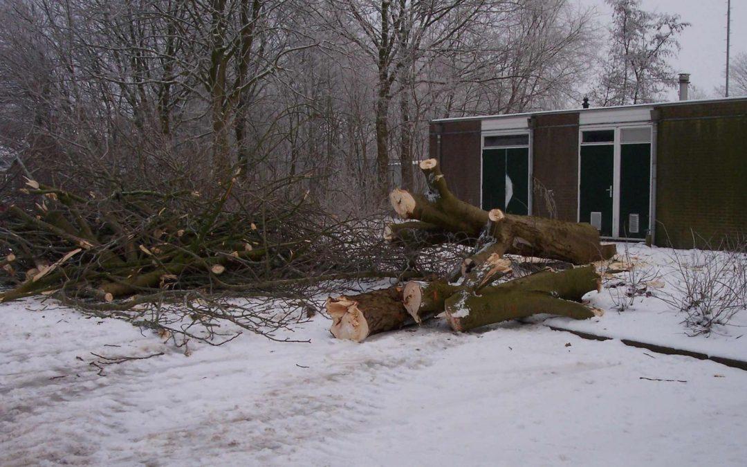 Kastanjebomen weggehaald